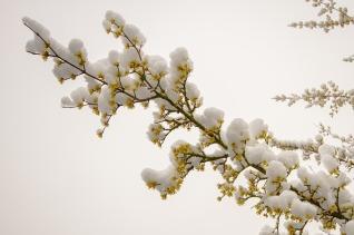 snow-3236512_640